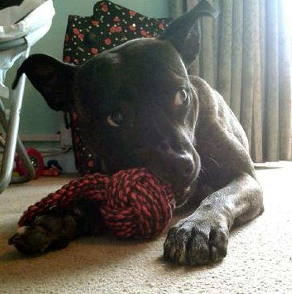 Dog Rescue Chessinton
